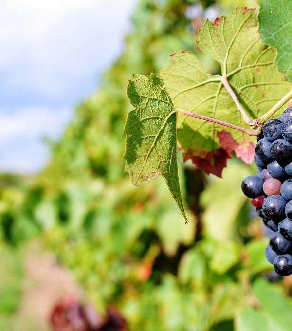 Bouteilles de Vin de Beaujolais Village Morgon et Chiroubles dans votre cave a vin a Aix en provence