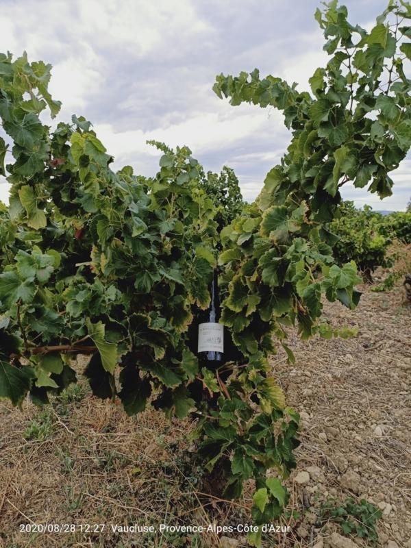 Les sélection des vins de la Vallée du Rhône pour CAVE CONSEIL